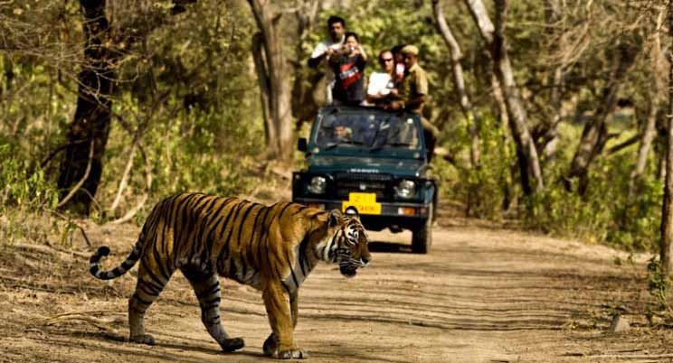 Jeep Safari, jim corbett national park tour packages with private car and driver rental services
