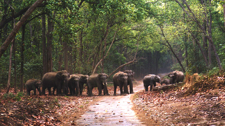 jim corbett national park tour packages with private car and driver rental services